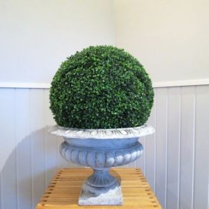 Medium Urn and Boxwood Ball